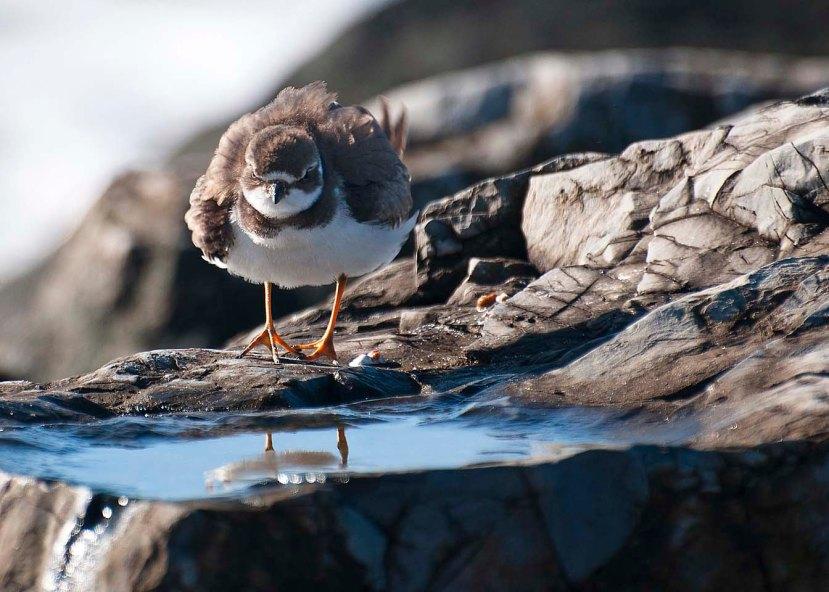 bird on jettyDSC_9806