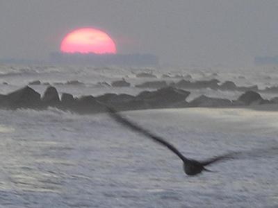 gull setting sun