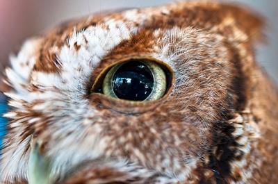 owl eye DSC_6139