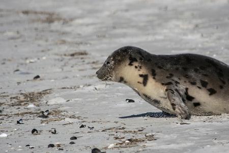 seal is upDSC_9655