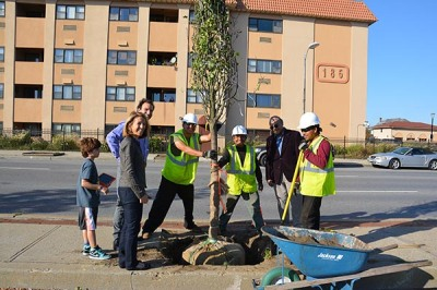 Tree planting Long Beach NYDSC_0523