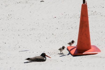Birds by cone DSC_1028