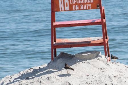oystchrs lifeguard stnd DSC_1712