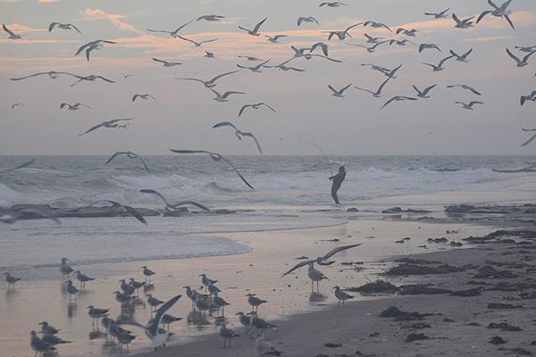 gulls fram fisherman DSC_2793