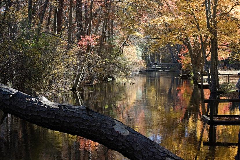 Autumn reflectionDSC_0084 UM 98.jpg