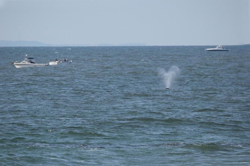 whale spout 100 DSC_3250.jpg