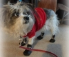 bailey-boots-vign-crp-img_8177