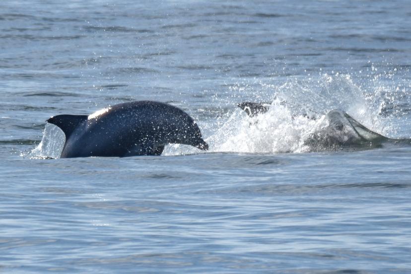 Woman Dolphin crp 1  DSC_4928.jpg