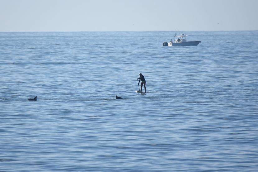 Woman w dolphins boat DSC_4812.jpg
