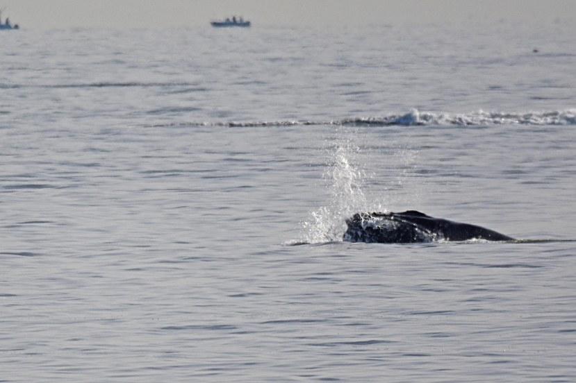 whale off neptune DSC_5853 a.jpg