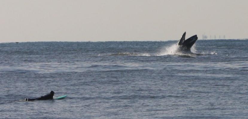Allison Blanchette's whale
