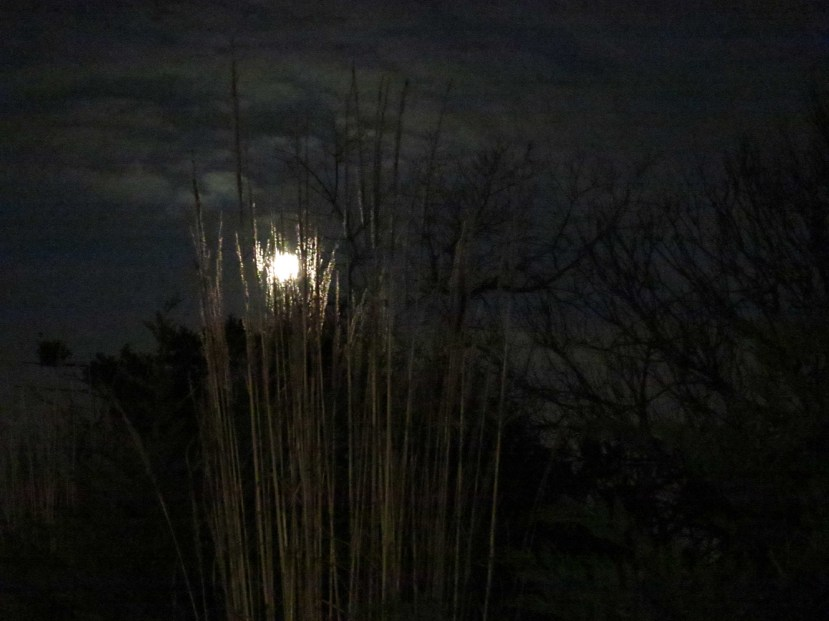 Moon IMG_7265.jpg