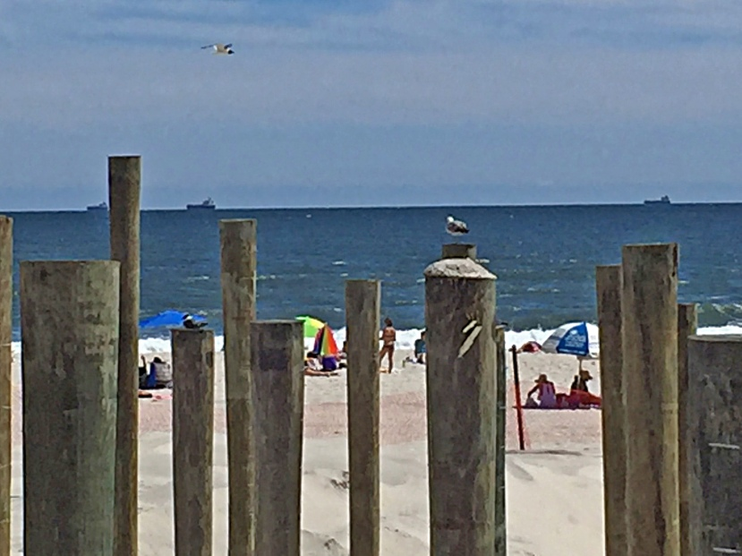 Pilings with gulls IMG_1775.jpg