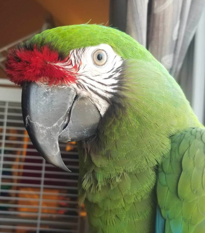 Parrot 2019-07-27 at 2.40.39 PM copy.jpg