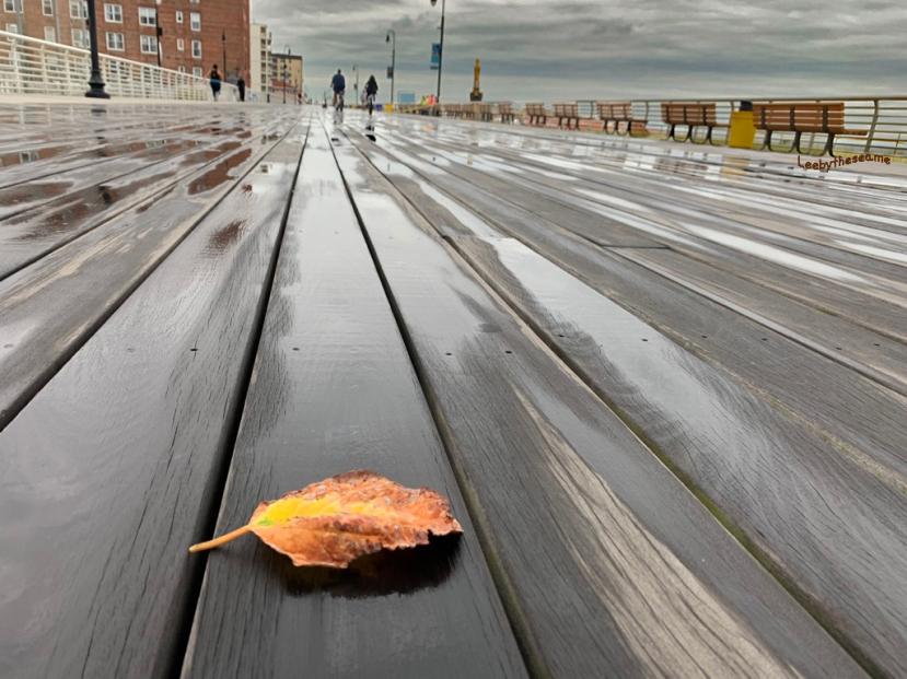 Leaf on the boards.jpg
