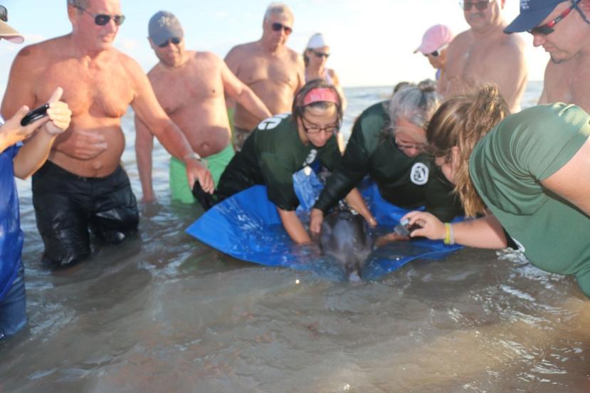 dolphin with balloon.jpg