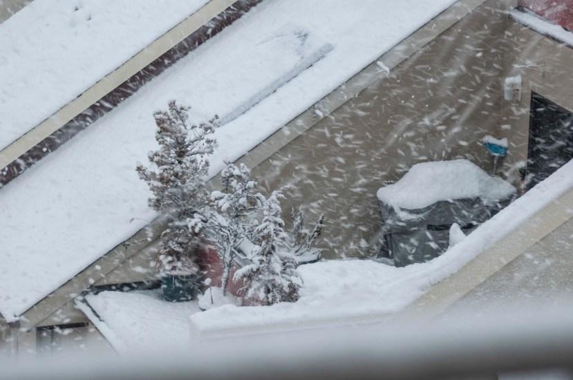 Snow terrace and treesDSC_6163.jpg
