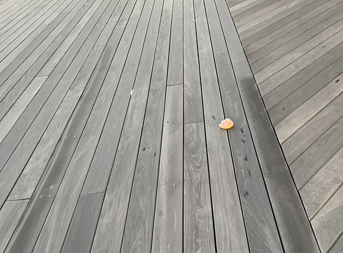 donut on boardwalk .jpg