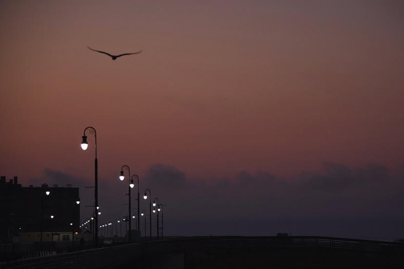 Gull close over boardwalk lights.jpg