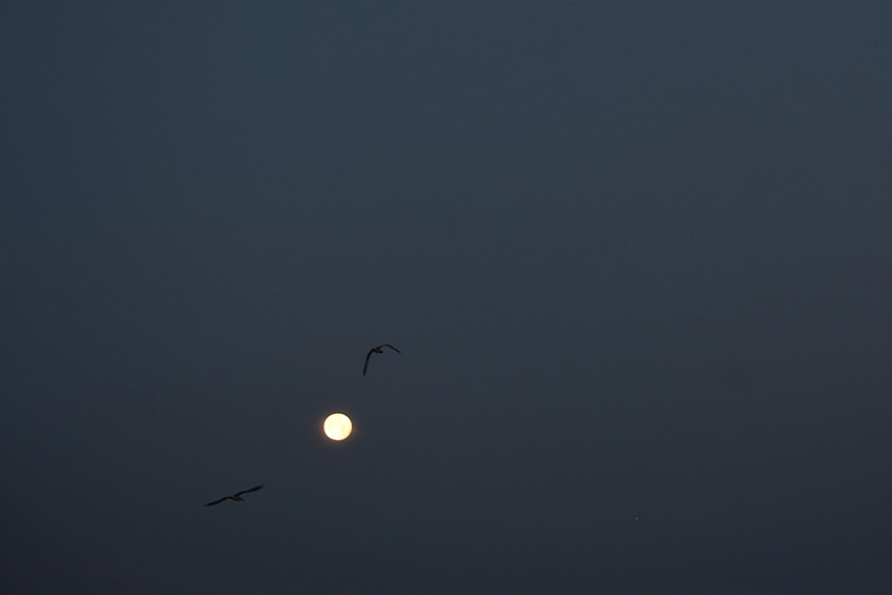 gulls moon.jpg