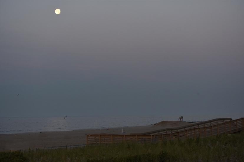 moon gull dune walk