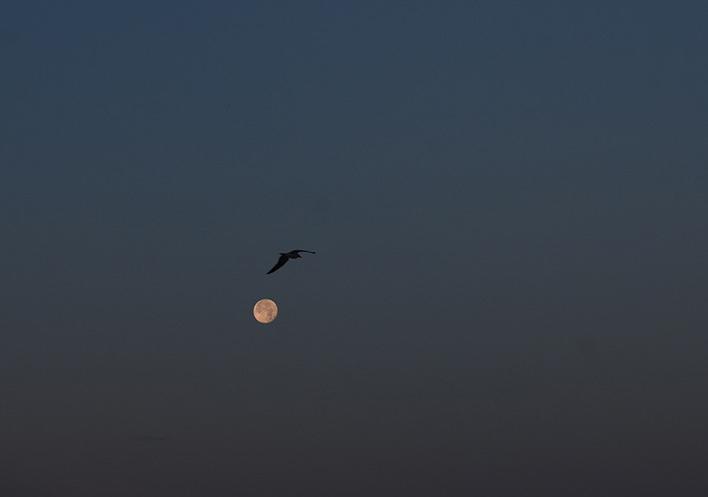 Moon w gull.jpg