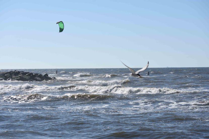 tern and boarder jetty DSC_9165.jpg