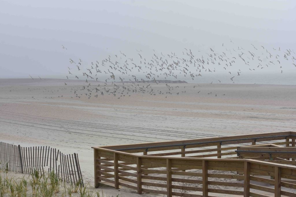 This image has an empty alt attribute; its file name is hundreds-of-gulls-flew-dsc_5515.jpg